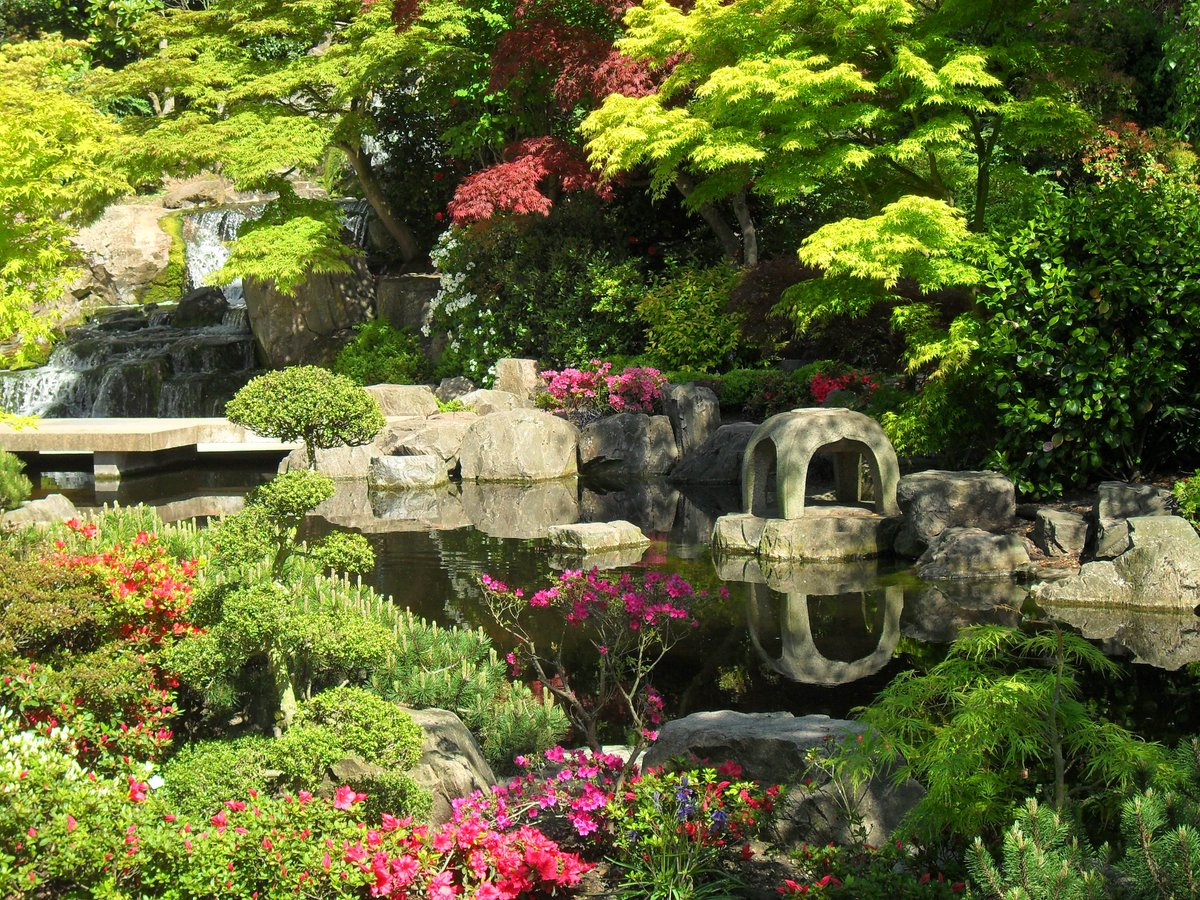 One of the most beautiful London gardens, perfect to meditate, chill and soak in the nature are Kyoto gardens.  You will find peacocks, squirrels wandering around, a tranquil tiered waterfall, a serene pond full of beautiful koi carp, stone lanterns, and Japanese maple trees. pic.twitter.com/z1VFwo49St