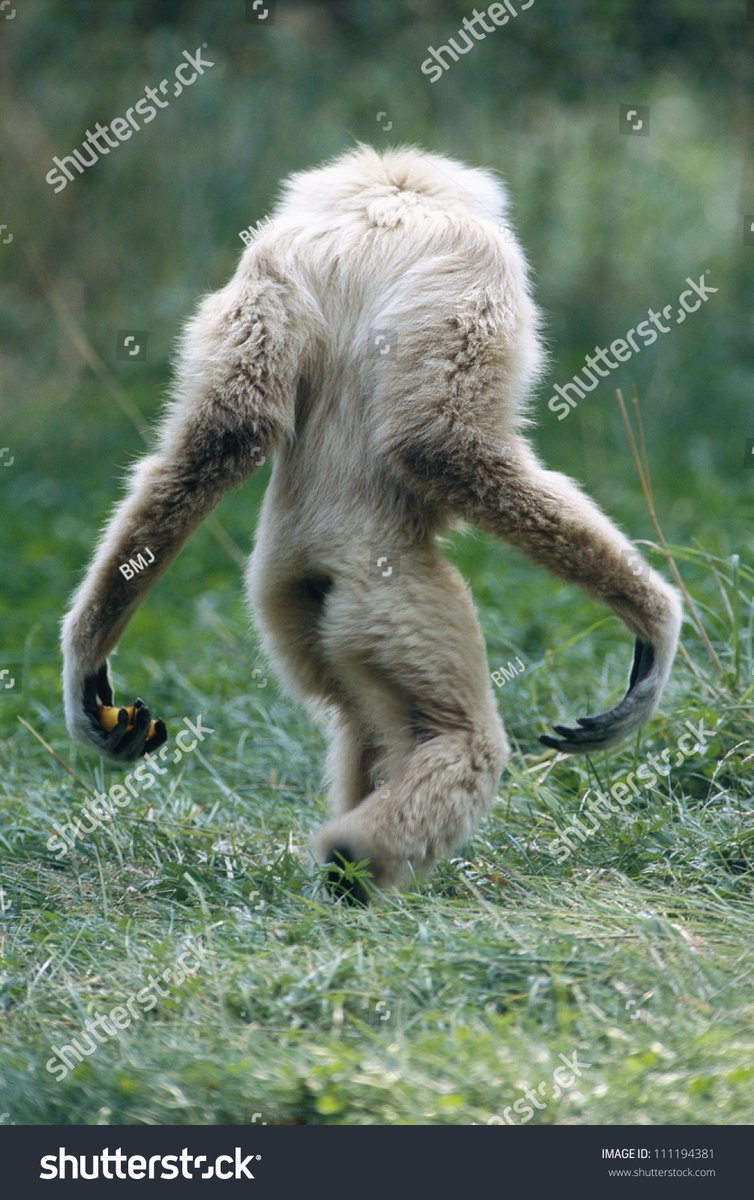 also, all my future monster designs will be based on this shot of a gibbon