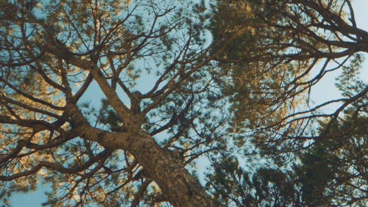 مجموعة #إيلي_صعب لخريف وشتاء 2021.. العودة للجذور! شاهدوا الفيديو للتفاصيل: https://t.co/eEnXvM3uav #زهرة_الخليج_تلهمنا #زهرة_الخليج_يوليو2020 @ElieSaabWorld https://t.co/dmM4TQDkQJ