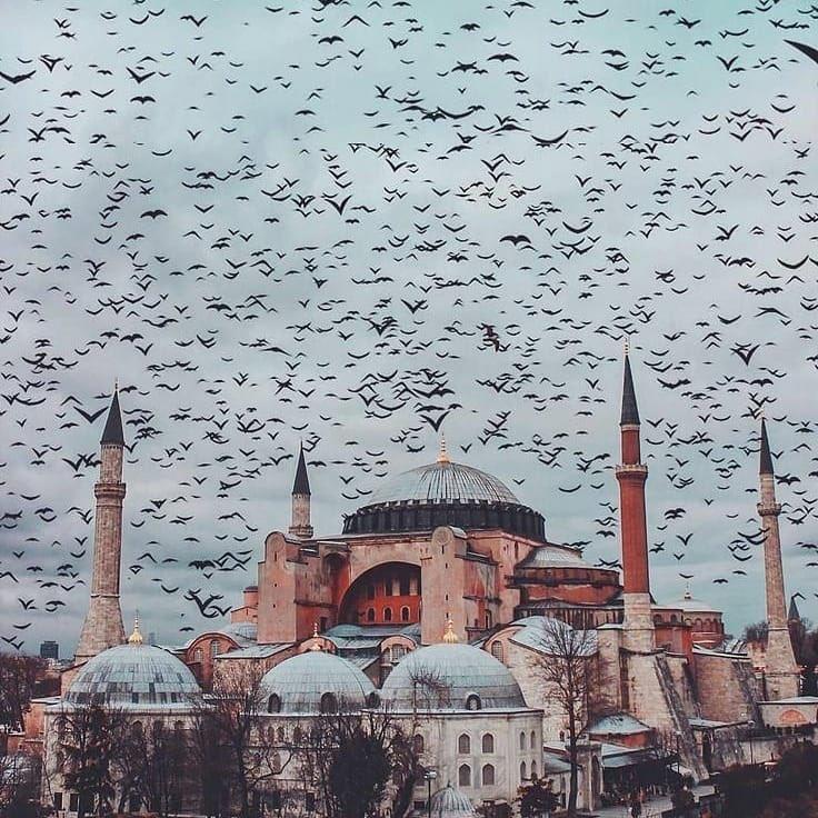 Danıştay, 1934 kararını iptal etti: #AyasofyaCamidir dedi! * Bu yıl #15Temmuz tarihî bir âna şahitlik edecek! Türkiye'nin istiklâl ve istikbal mücadelesinde bir milat olarak tarihe geçecek...  * İnşallah. https://t.co/jsaA2KVVti