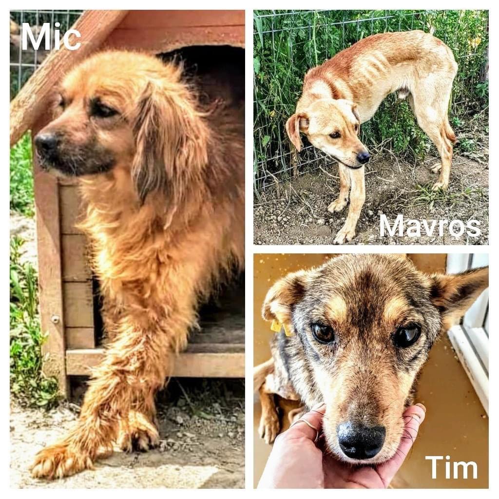 SOMMER VIPPS til 43336 De 3 guttene på bildet er de siste som har blitt en del av vår Dog Rescue Norway familie. Fra nå blir alt bedre for dem. Mic  Mavros  Tim #saveastray #adoptdontshop #spayandneuter #drninstaficcialpic.twitter.com/Rnixm4UEu0