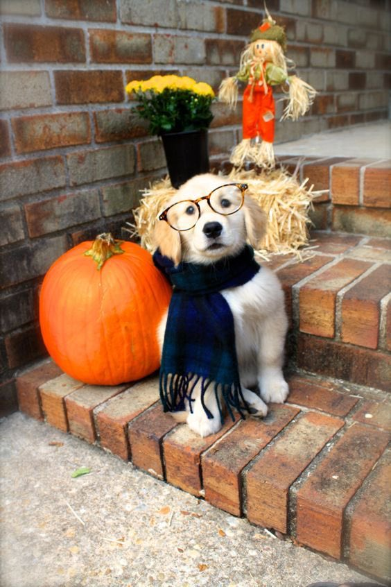 76 Days Until Fall!#autumn #fall #countdown #autumncountdown #fallcountdown #leaves #pumpkins #acorns #apples #applecider #sweaterweather #sweaters #hoodies #bonfires #smores #harvest #autumn2020 #fall2020 #woofwednesday #puppy #dogpic.twitter.com/FoYNFLLJ1x