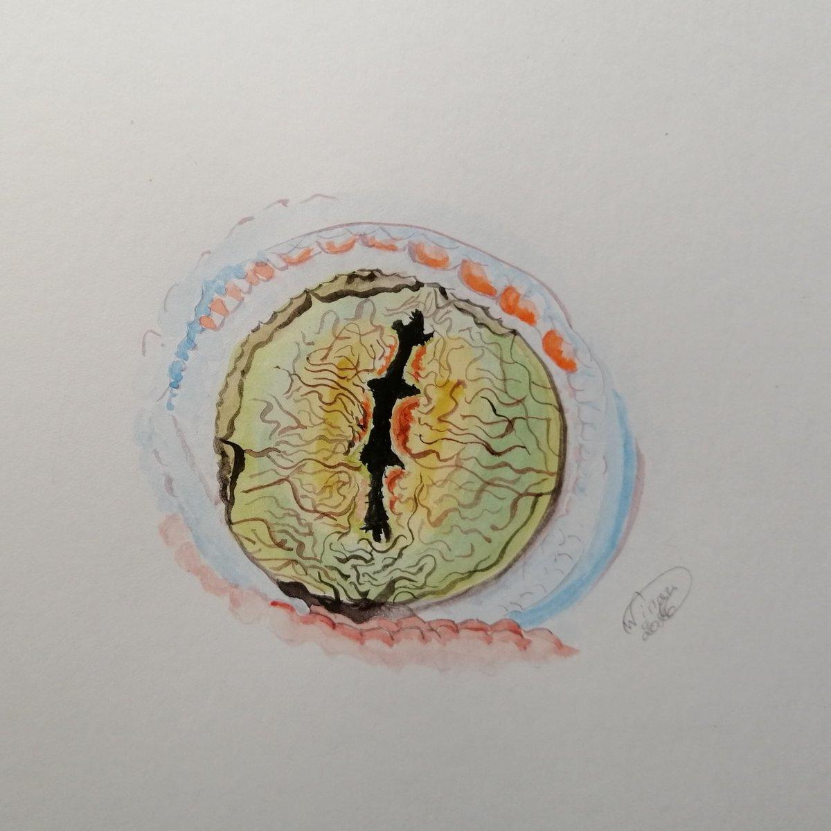 Gecko Eye   #inktober #inktober52 #inktober52eyespic.twitter.com/4gSDxzgY4Q