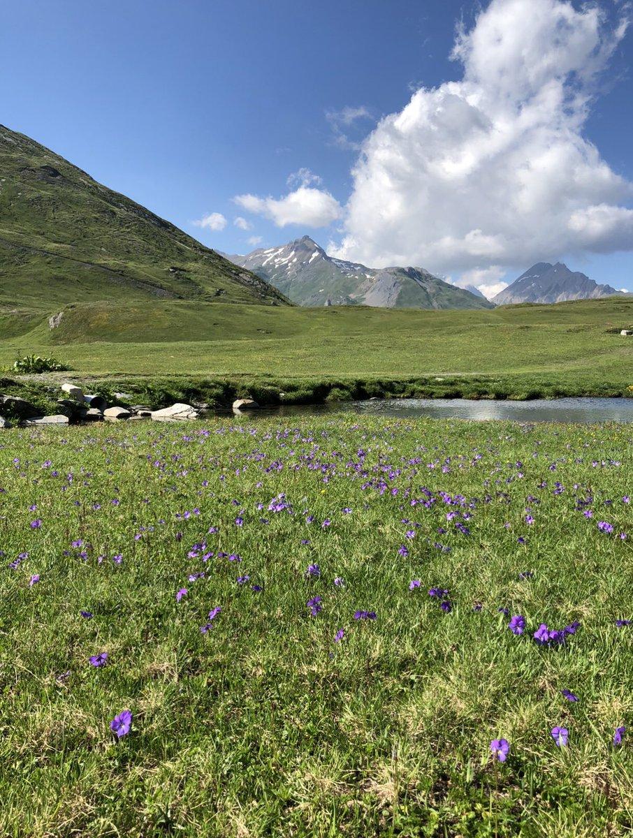 By C.B.#nature #landscape #naturephotography #naturelovers  #photography #mountains #trek  #Beautiful  #mountains  #snow  #flower pic.twitter.com/4pSXJq61Ei