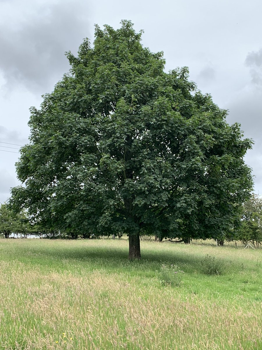 You've got to love a big tree!  #walking #selfcare #naturelover pic.twitter.com/EmohoOfet6