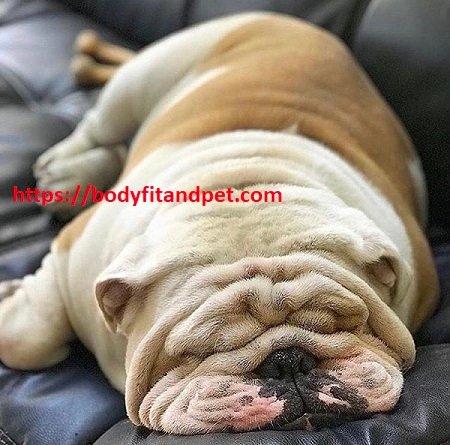 #dogs #puppy #cute #dogstagram #instadog #love #pet #doglover #dogoftheday #instagood #pets #puppies #animals #ilovemydog #petstagram #adorable #pup #puppylove #photooftheday #dogsofig #lovedogs #instagramdogs #animal #instapuppy #dogs_of_instagram #petsofinstagram #dogsofinstapic.twitter.com/JNTDfCD7tC