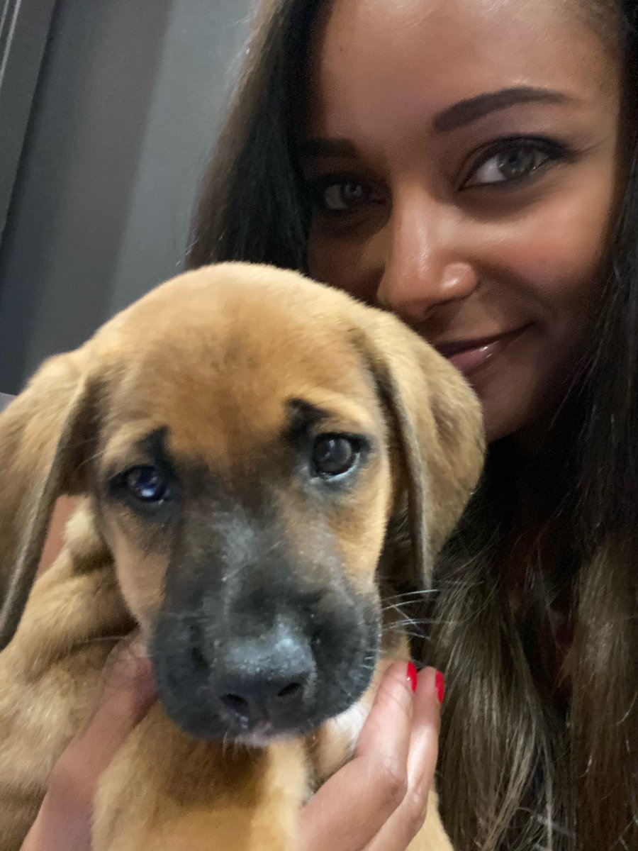 It's the Puppiest night in wrestling! Following #AEWDynamite AEW's First Puppy Battle Royale, hosted by @tonyschiavone24 ! These 🐶's come from @angelsrescue in ATL! 🐾This is Brandi Rhodes!! She is a clear pack leader. She'll do GREAT tonight! #AEWPuppyBattleRoyale