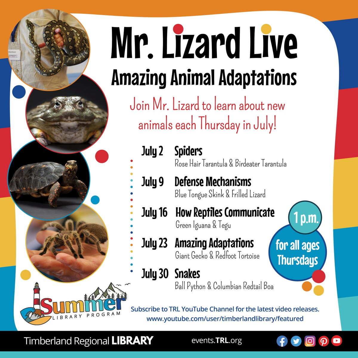 Join Mr. Lizard to learn about new animals each Thursday in July at 1 p.m. July 9th is all about animals who use defense mechanisms, such as the Blue Tongue Skink and the Frilled Lizard. Enjoy the show on the Timberland Library YouTube Channel. https://www.youtube.com/user/timberlandlibrary/featured …pic.twitter.com/HiaWucKszG