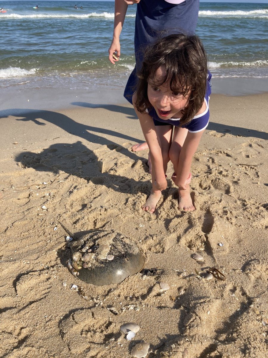 we found a horseshoe crab and everyone lost their shit