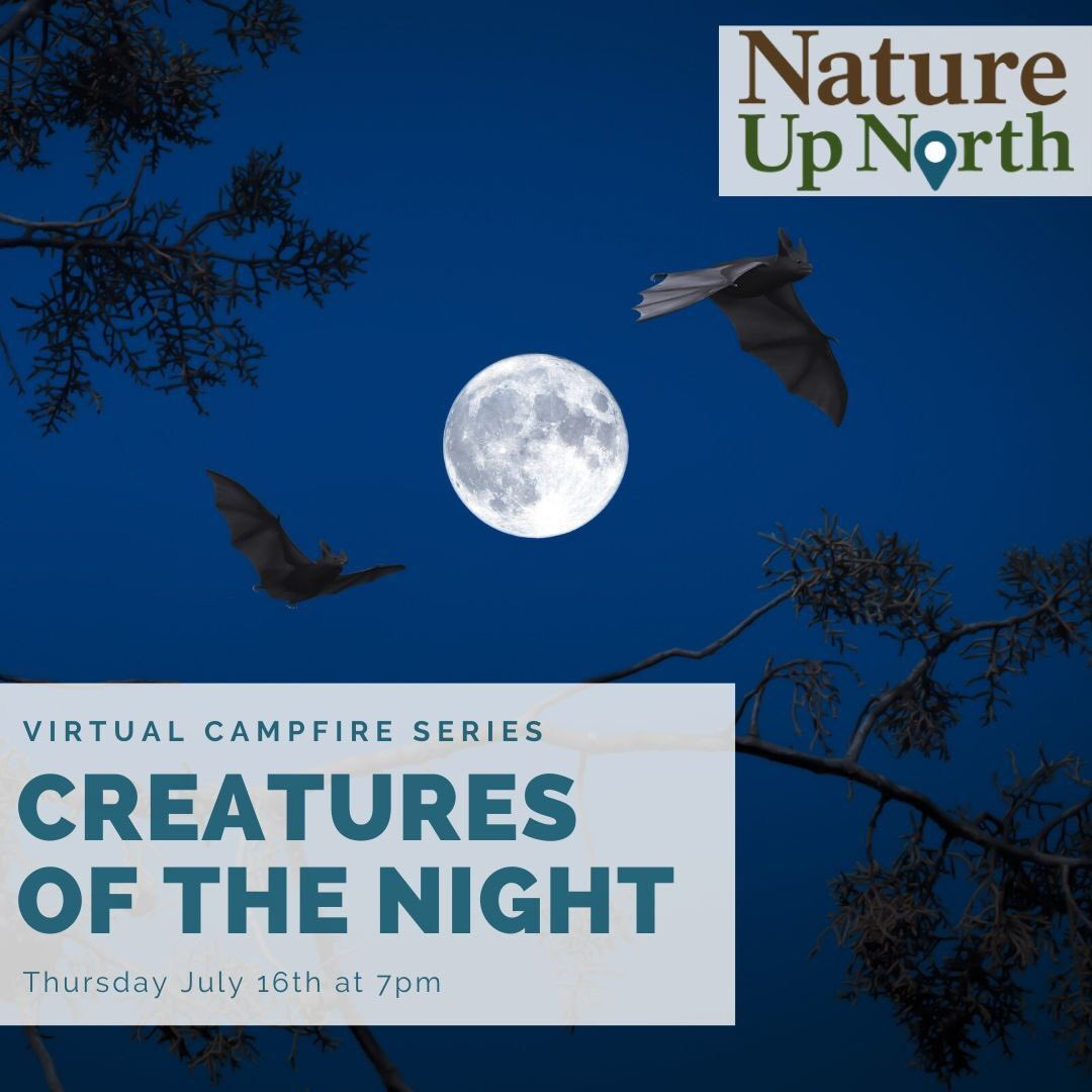 Join Nature Up North for our next virtual campfire! Through interactive activities you will learn about the nocturnal life of animals that come out once the sun goes down. Visit the link below to register for this special event!  https://www.natureupnorth.org/event/virtual-campfire-creatures-night …pic.twitter.com/woOnsHJedA