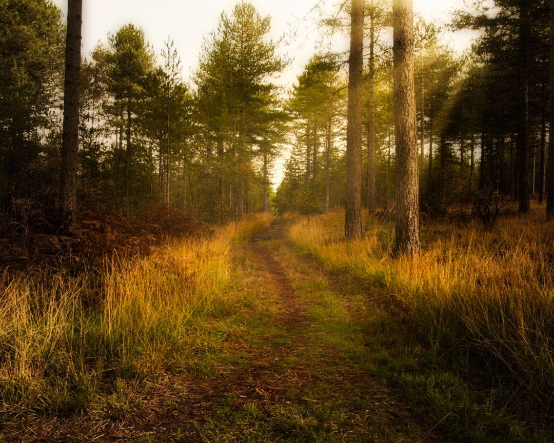 To be an artist, you need to exist in a world of silence.  #autumnvibes #autumncolors #autumnleaves #autumn #autumn #sunrise_shotz #sunrise_sunset_photogroup #sunrise #naturephotography #sunrise_sunset_photogroup #sunrise #sunrise_captures #foggy #mistpic.twitter.com/oDmXP3Ja95