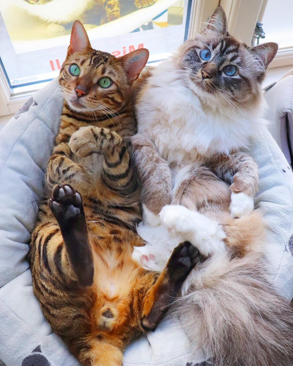 Who wants to join us  #cats #CatsOfTwitter <br>http://pic.twitter.com/2S6tuqlKuA