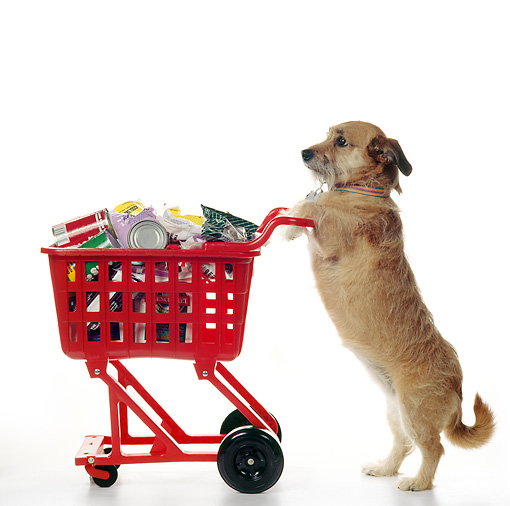 BEST Deals For Your Dog https://bit.ly/2ZaQJLm #dogshopping #dogsofinstagram #dogloverpic.twitter.com/MQKY0Y4hYs