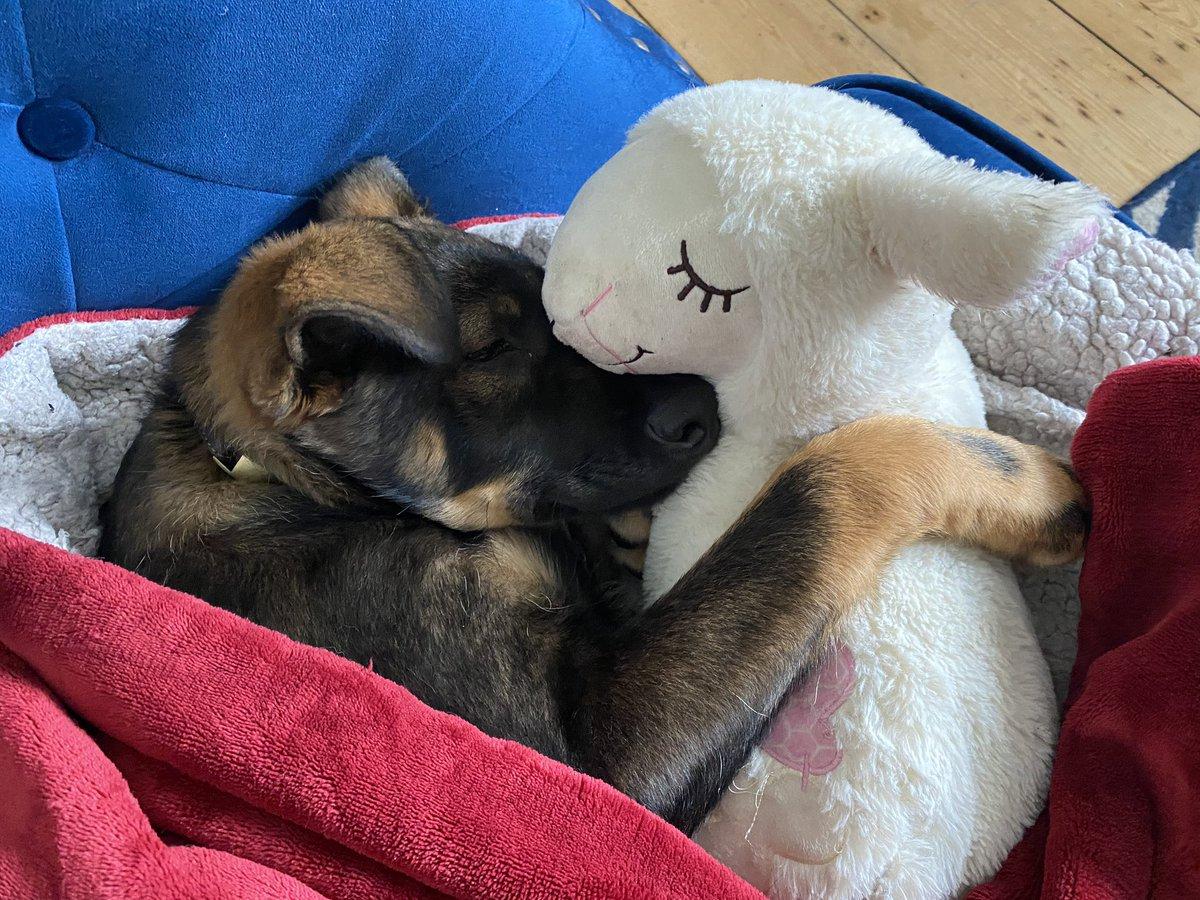 Little Jimi and his lamb!pic.twitter.com/uDu5110cHM
