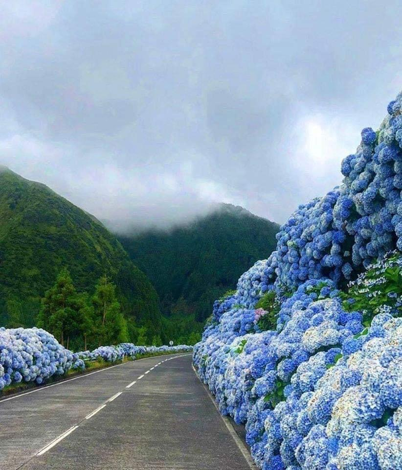 #NaturePhotography #beautiful blue  pic.twitter.com/FtdnY52wWq