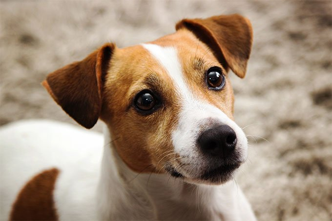 """Dr Andrew Power on Twitter: """"Jack Russell Group?… """""""