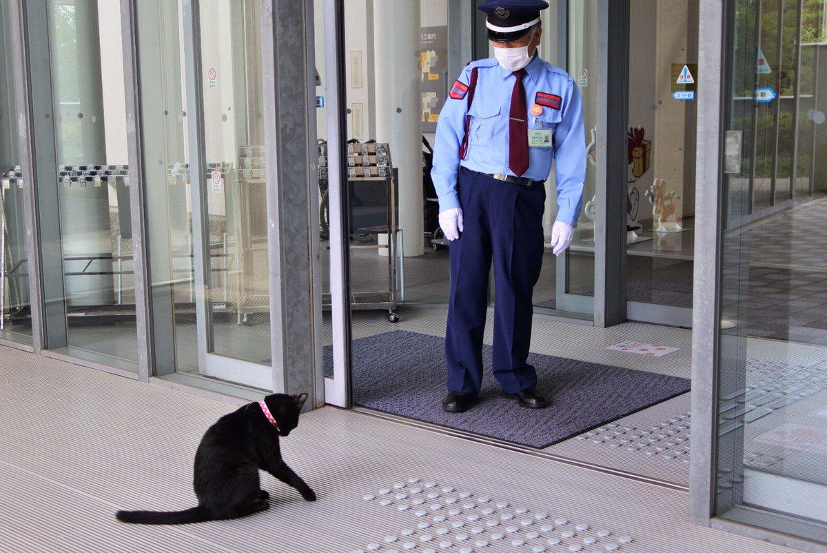 『写真👮♂️😺photo 』(2020/ 7/ 8)🎨ここのところ動画ばかりでしたので、ツイートしますニャ。#尾道 #千光寺公園 #尾道市立美術館 #黒猫 #cat
