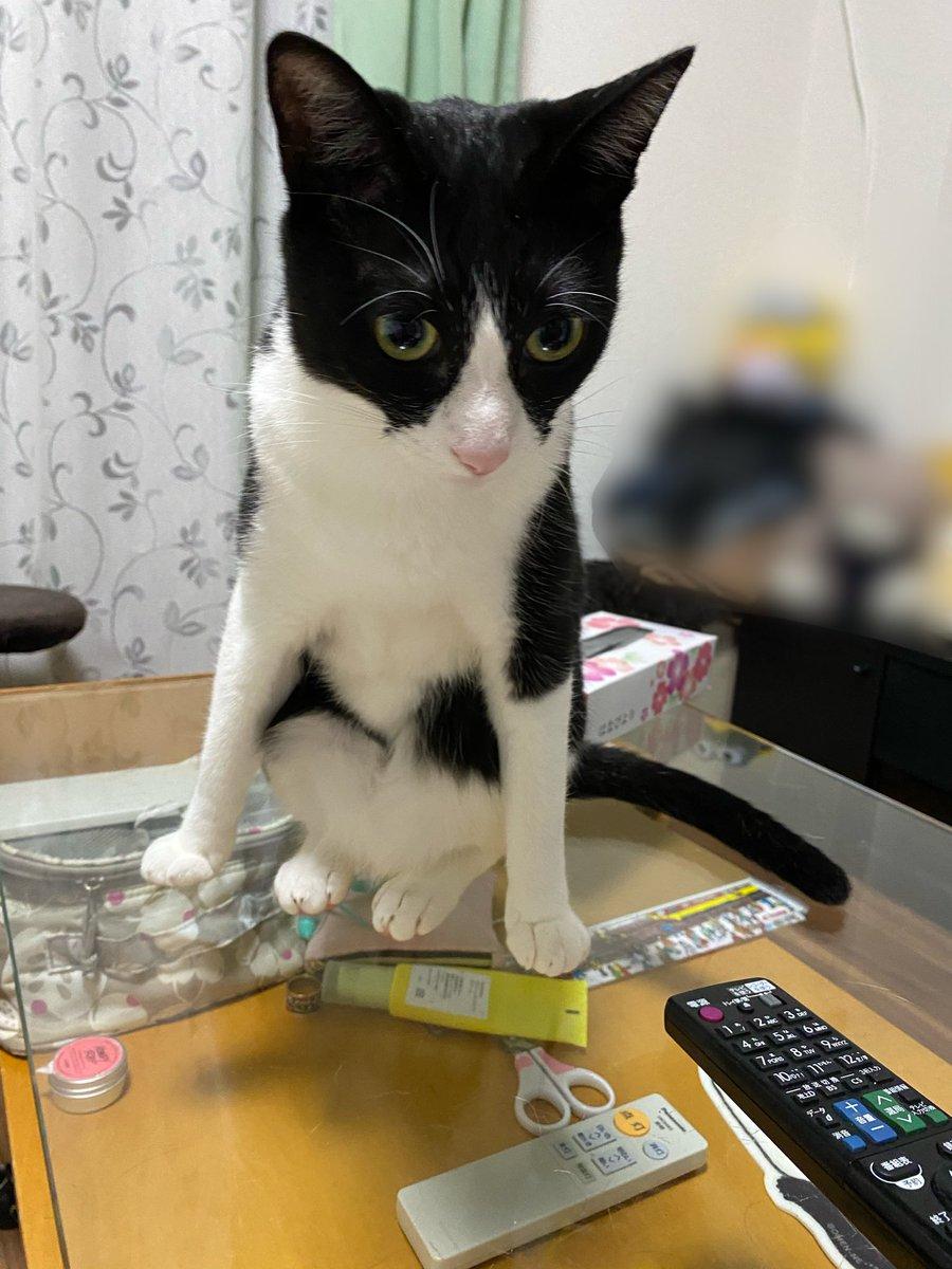 なんか……怒ってらっしゃいますか??#猫 #大豆姉妹