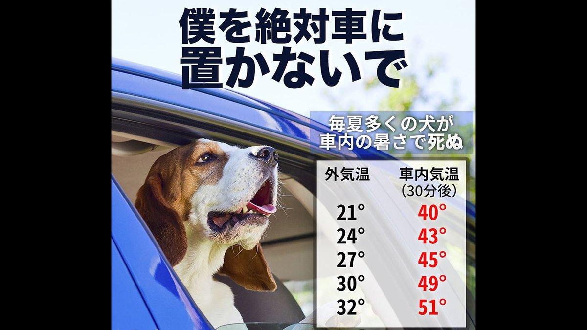 お願い。夏場は動物を車に置いて用事を済ましたりしないで下さい。車内の温度はすぐ50度を超え、毎年そうやって熱中症で死ぬペットがいる。