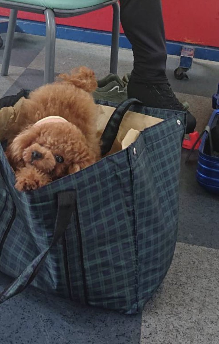 鞄を開けたら?#宇野昌磨#宇野トロ#一緒に出かけるのは嬉しそう