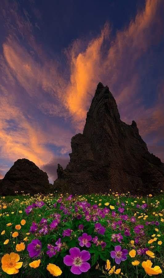 #mountain #mountains #nightTwitter #night #Cloudy #fieldofflowers #flower #Flowers #flowerphotography https://t.co/kh5lpJWN4x https://t.co/lcsfsugN0v