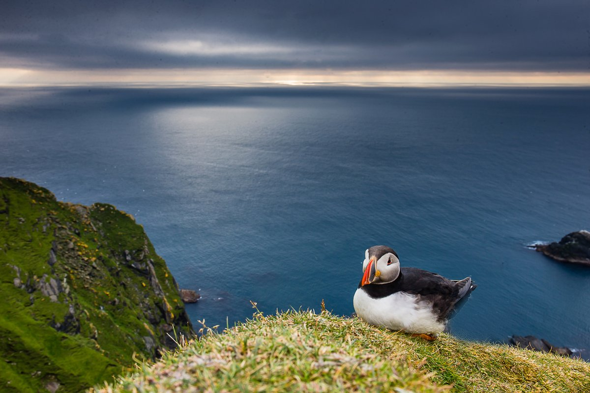 Yep, it's a shame to be missing out on the puffin season. But the last thing my hard drives could handle was more puffin images 🤣 they are stacked to the rim with over 20k unseen images of these amazing birds #puffins #summer #shetlad