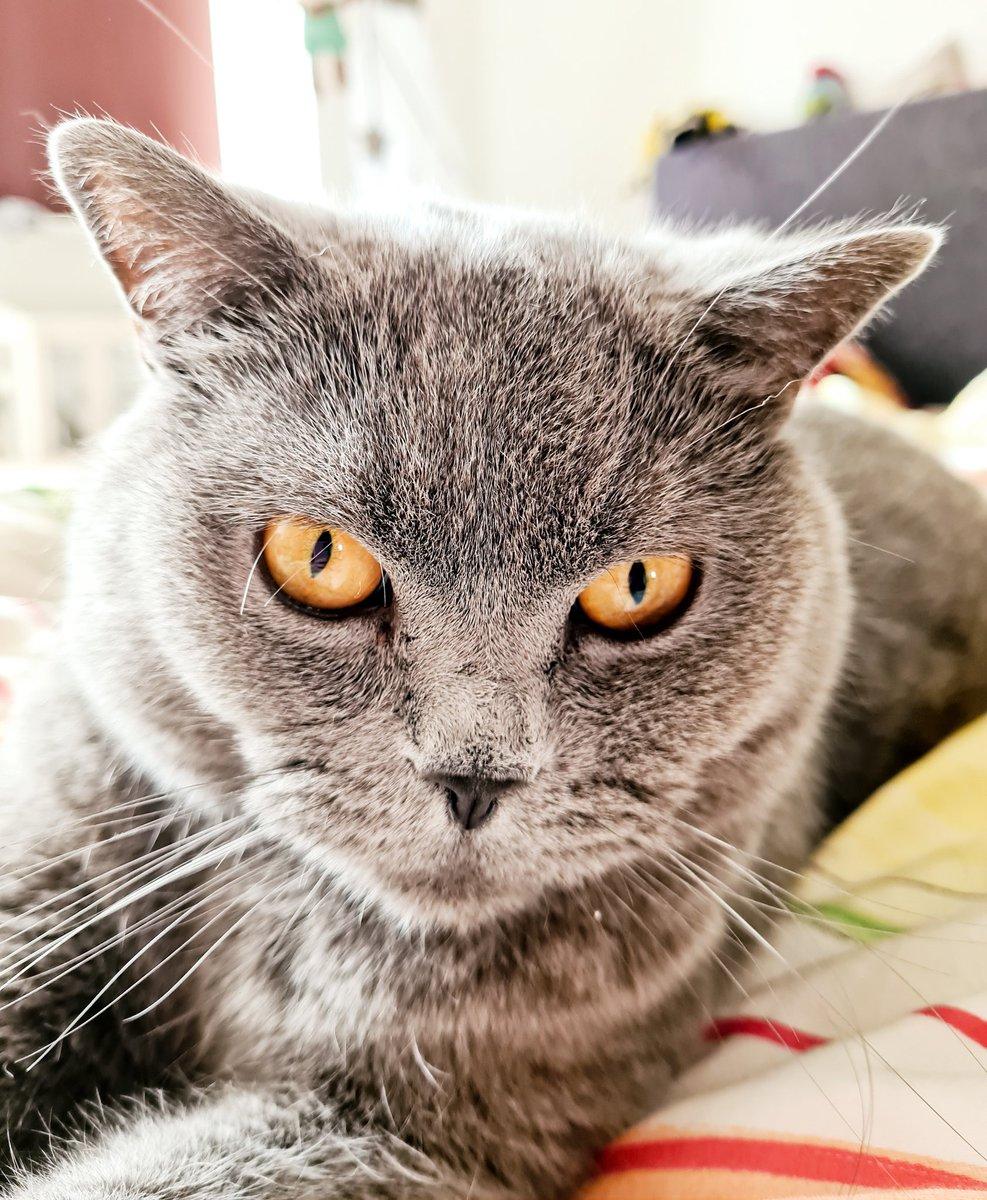 Heute mal wieder ein Katzenbild. Habt einen schönen Tag 😁  #cat #katze