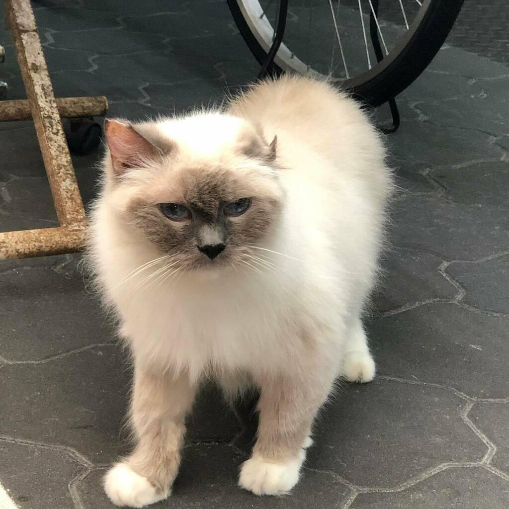 黒門市場の某クリーニング屋の店長猫 #にゃー #ねこ #猫 #ネコ #ぬこ #neko #nekostagram #にゃんすたぐらむ #catstagram #cat #ねこすたぐらむ #instagramcats