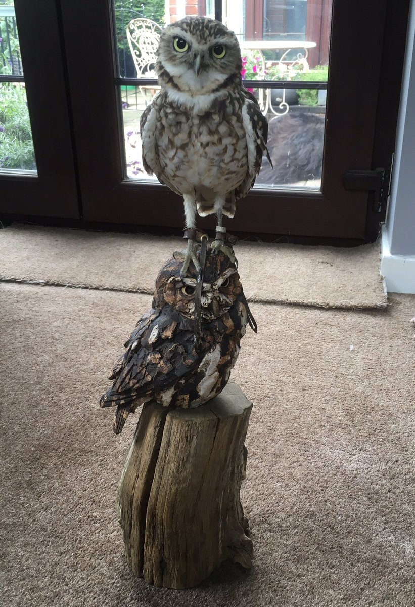 We lost all of our income #COVID19 You can help us continue our work & get the chance to win an amazing little owl sculpture by @SculptureSimon worth £490, every donation of £5 (£10 = 2)  http:// localgiving.org/charity/hackba     … gets an entry to the raffle which will be drawn on 31.7.2020 <br>http://pic.twitter.com/Fz6BG9lB18