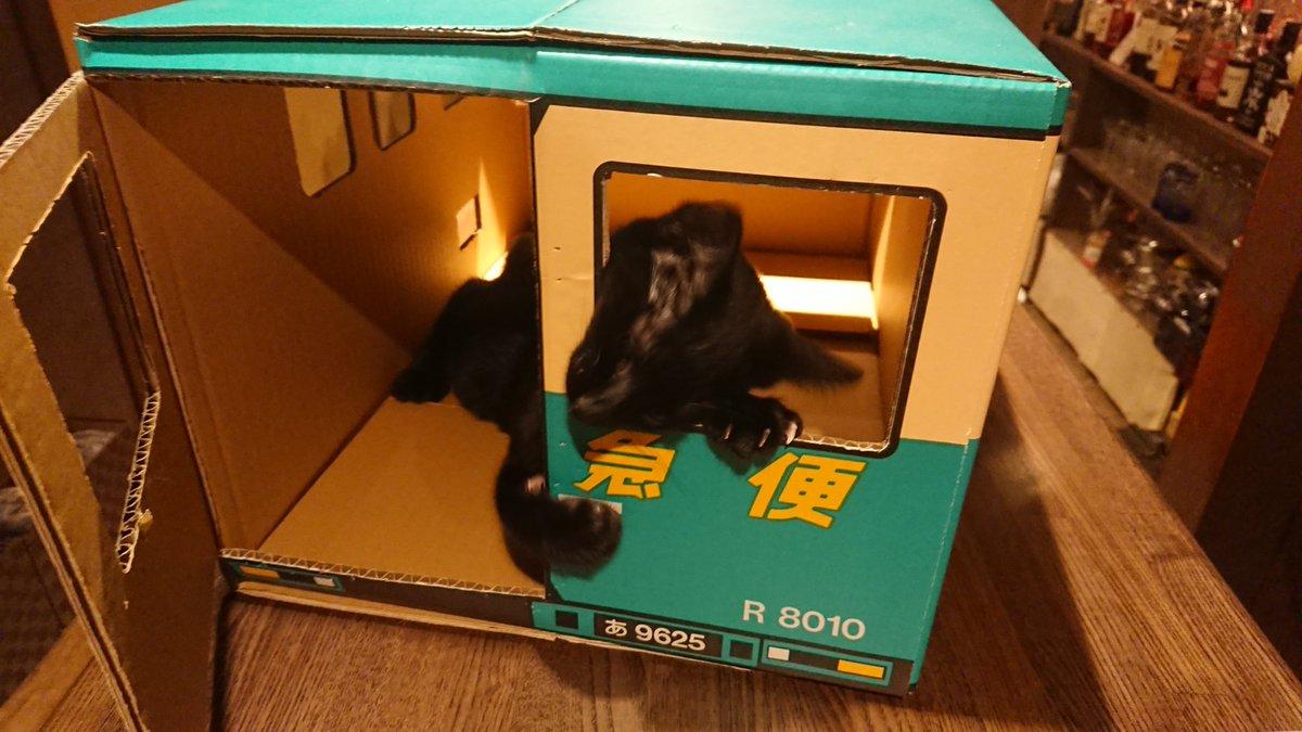 Kisuke Security Service業務日報  1階店舗内、カウンター上を警備中のギンジ隊員です  今日も自宅の平和は守られましたw  #中国茶とお酒のお店喜助  #KisukeSecurityService #kss広報部 #ねこ #猫 #cat #黒猫 #ギンジ隊員 #接客係銀次 #看板猫  #猫のいる店 #中崎町 #天満 #クロネコヤマト