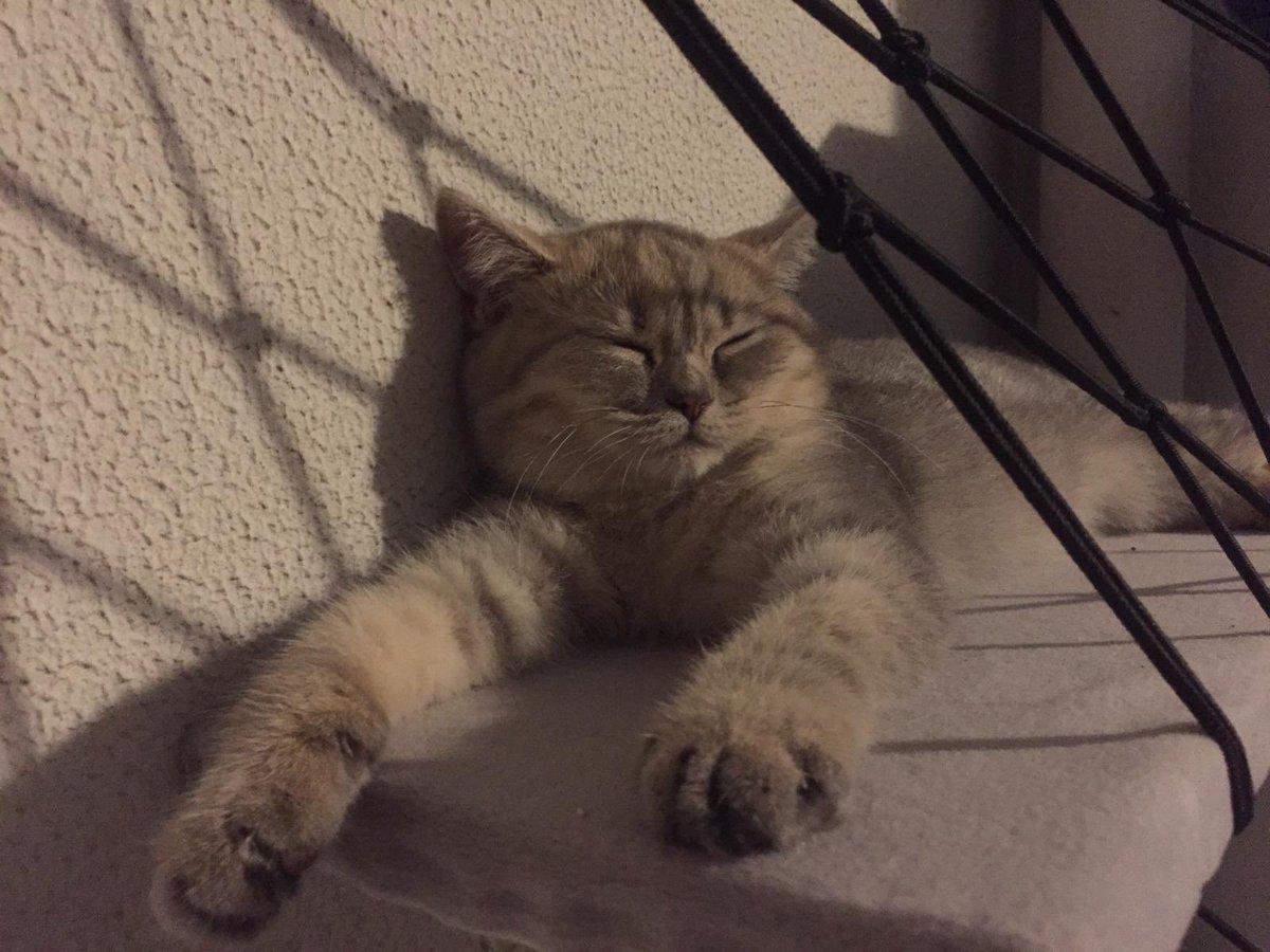 #CatsOfTwitter #friyay #Caturday #cats #catoftheday #catsrule #gatos  #catoftheweek #catvideos #kittyloafmonday #catlife #whiskerswednesday #cutecats #purrsday #FluffyFursday #SundayFunday #jellybellyfriday #toebeantuesdaypic.twitter.com/GhfYMhCOlZ