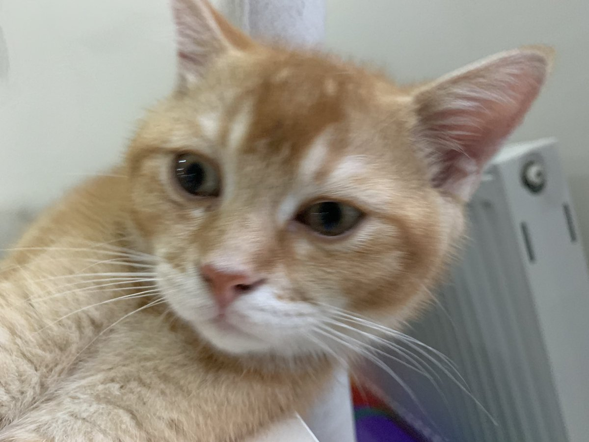 #CatsOfTwitter #friyay #Caturday #cats #catoftheday #catsrule #gatos  #catoftheweek #catvideos #kittyloafmonday #catlife #whiskerswednesday #cutecats #purrsday #FluffyFursday #SundayFunday #jellybellyfriday #toebeantuesdaypic.twitter.com/CW6JX3wtC3