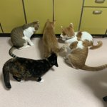 猫たちが一か所に集中してる…。なにかいる??怖いんですけど