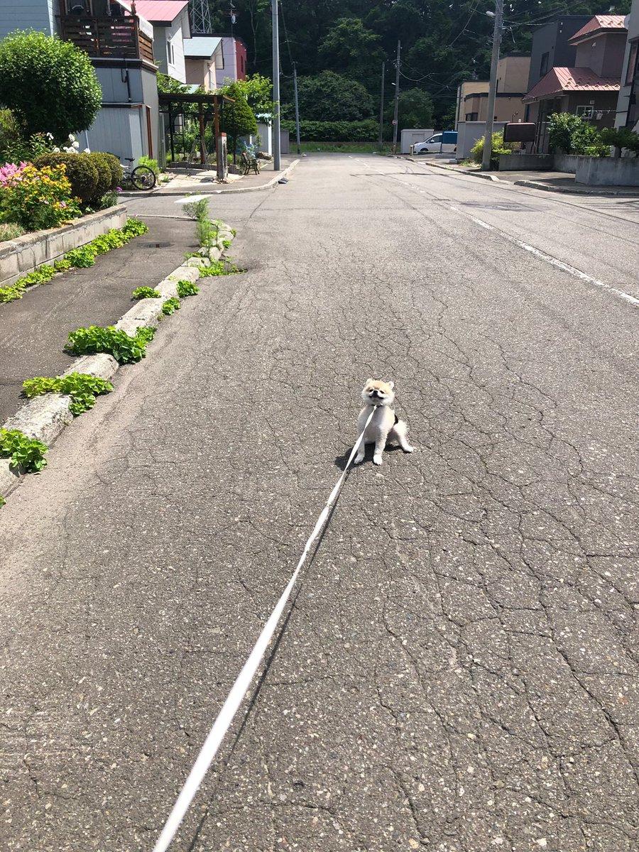 絶対歩きたくない犬