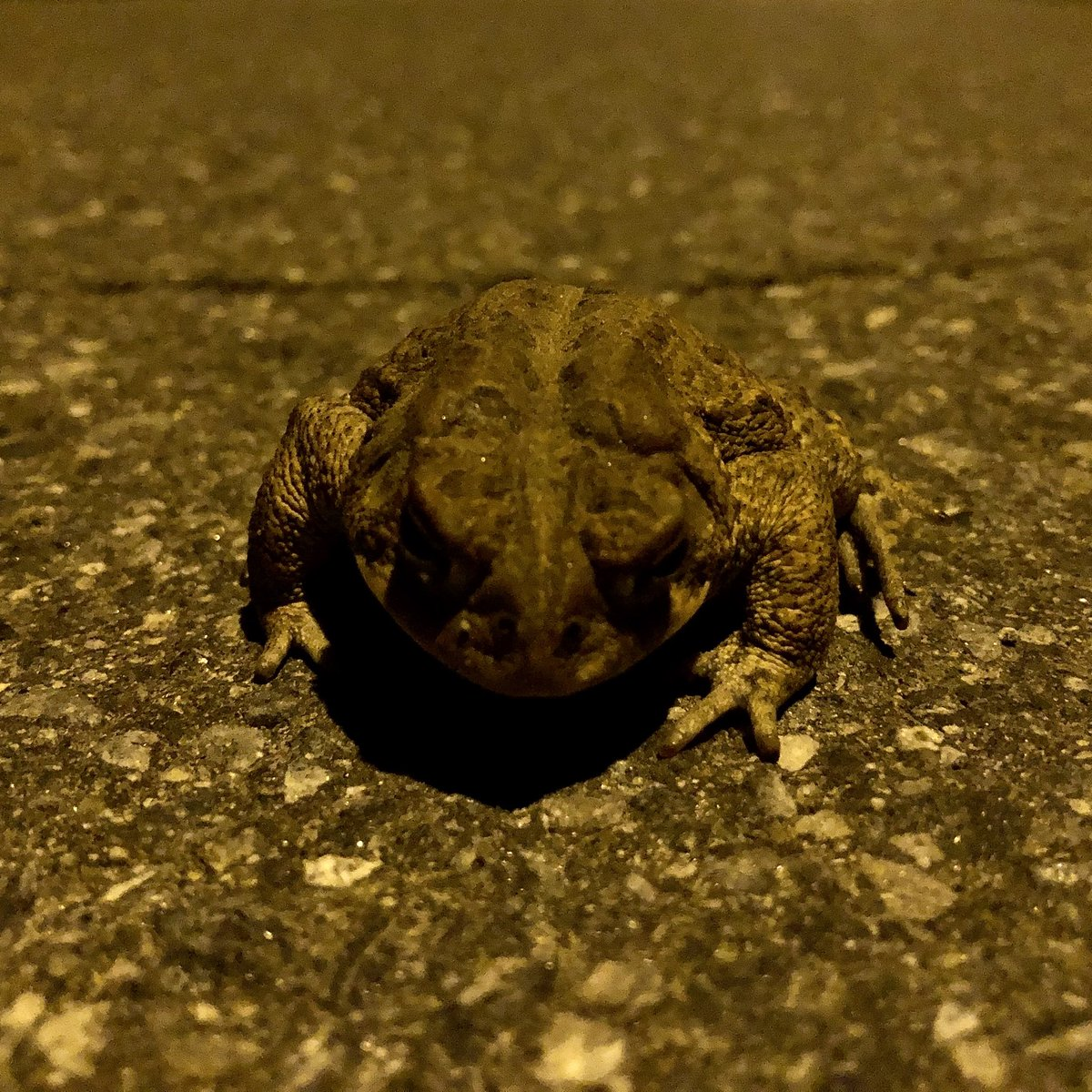 The night of the toad.