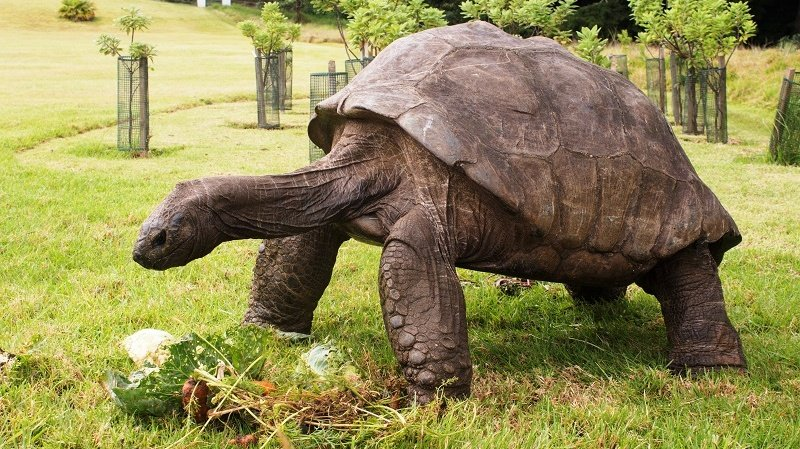 The International Bruckner Society has announced the appointment of Jonathan, the 188-year old giant tortoise, as its new editor-in-chief. In a statement, the IBS said:   'Jonathan brings with him a wealth of first-hand experience, mostly about leaves and shredded vegetables.' https://t.co/saKqddrcOv