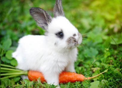 """Bitcoin is Money Over Internet Protocol."" #bitcoin #bunnies pic.twitter.com/0PR8MIRMaE"
