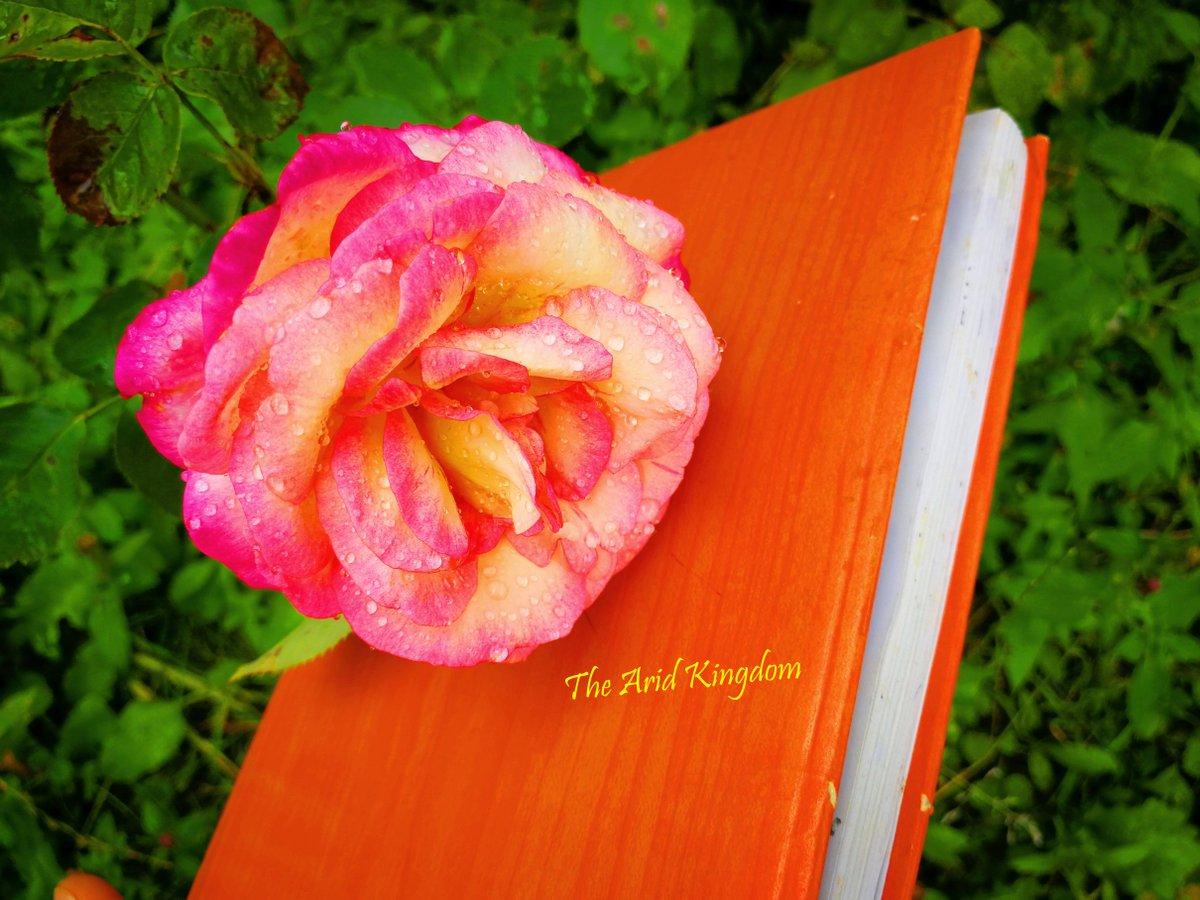 #Tomorrow is the #day! Ready to grab the #book! Gosh, I love #butterflies! #photo @aridkingdom #Instagram smashwords.com/books/view/102… #Mâine e #ziua #magică! Vino să iei #cartea și să te bucuri de #povestea Fluturii Trandafirii! #smashwords #Romania #iubire #cărți #roses #lectura