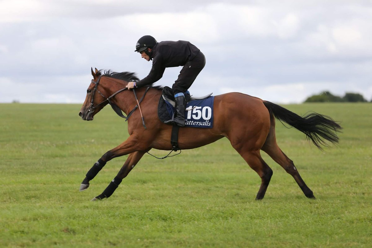 Delighted to sell this lovely Camacho filly @Tattersalls1766 yesterday, good luck to new connections !!
