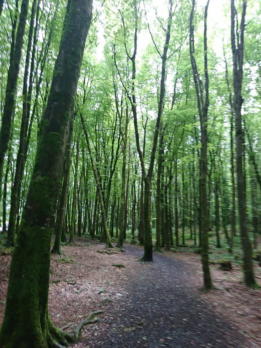 Lost in the woods. Newmarket on Fergus. Co Clare. 2018  <br>http://pic.twitter.com/3vBRf1IAtY