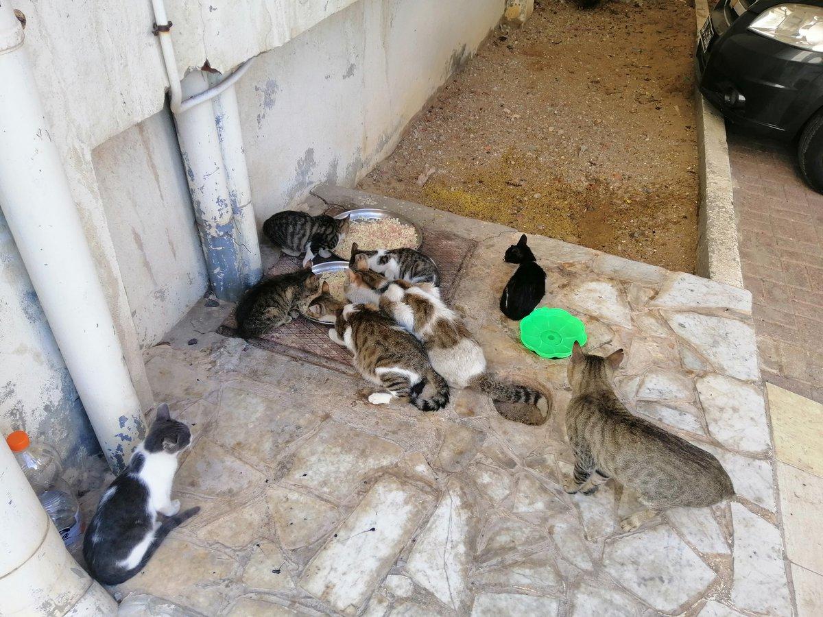 Cette dame qui prépare de pâtes blanches avec des salami pour les chats de la résidence de façon quotidienne, parce que elle aime les chats pour de vrai et non pas pour prendre des photos avec et les poster sur Instagram, une vraie humaine qui fait honneur à notre race. https://t.co/AMKjfmso6N