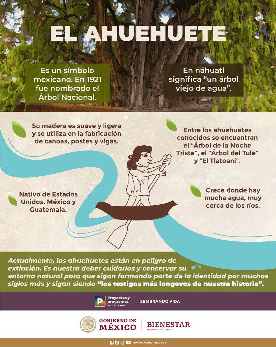 """El """"Árbol Nacional"""" es un símbolo muy importante en nuestra historia y testigo de ella gracias a su longevidad. Las figuras sagradas de la naturaleza durante la época prehispánica reflejan una relación de respeto al medio ambiente que debemos recuperar. #DíaMexicanoDelÁrbol"""