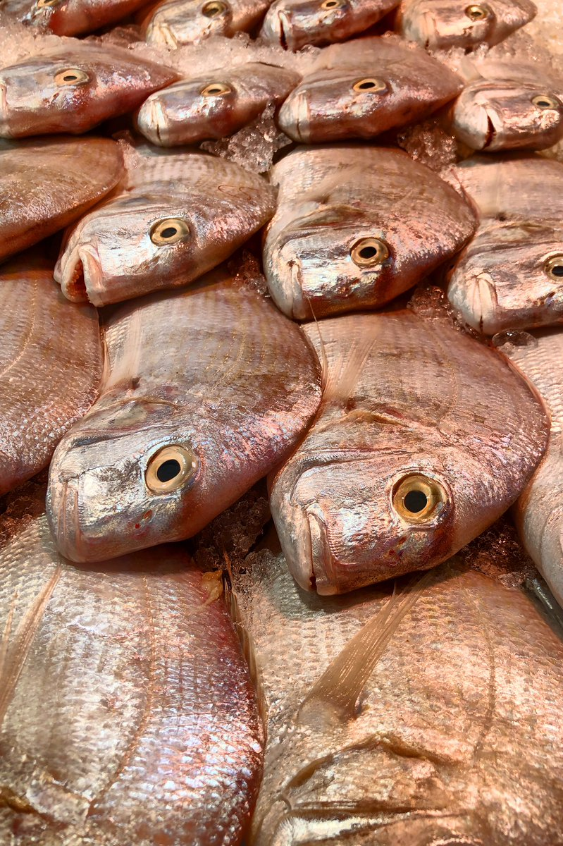"""#Andak, or #RedSea #Bream (#Riyadh #SaudiArabia fish market)is the most popular fish among #GCC anglers. Also named """"Mazyounah"""" meaning """"dolled-up"""" in #Arabic, as it is beautiful and reddish. Arabic seabream is one of the most nutritious fish species @NatGeoTravel @nytimestravel https://t.co/3Dz7BJkTp8"""