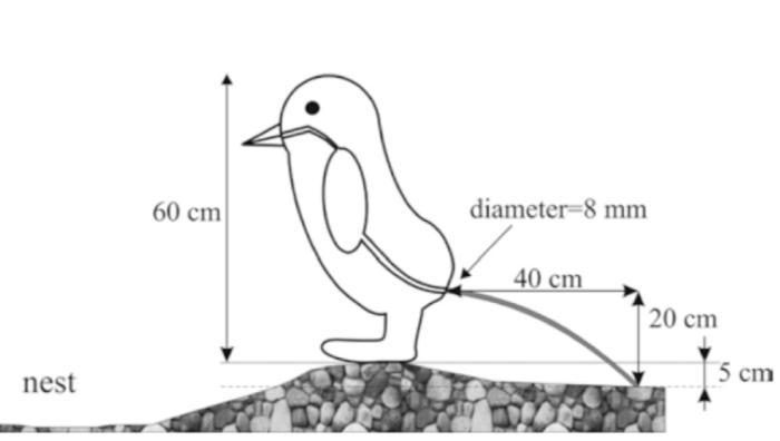 Ученые наконец–то выяснили— на сколько именно пингвины способны выстрелить калом   > расстояние составляет 30–40 см, а упругость их ануса в 3 раза выше, чем у человека во время дефекации. Давление в их прямой кишке должно составлять 0.6 атмосферы.  https://t.co/9CDKmzay0o https://t.co/zu6R4K7TBT