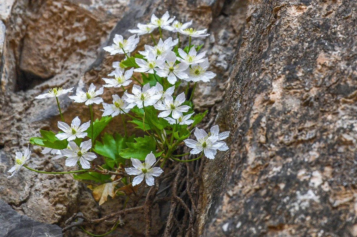 """Finally, China's """"Catalog of National Key Protected Wild Plants"""" will be revised. News just released today by Forestry Administration. It was released in 1999 - believe it or not, it has not been updated in 20+ years! I can't wait - we're losing so many species! #CBCGDF_IWT_Plant pic.twitter.com/vRCJ5geF15"""