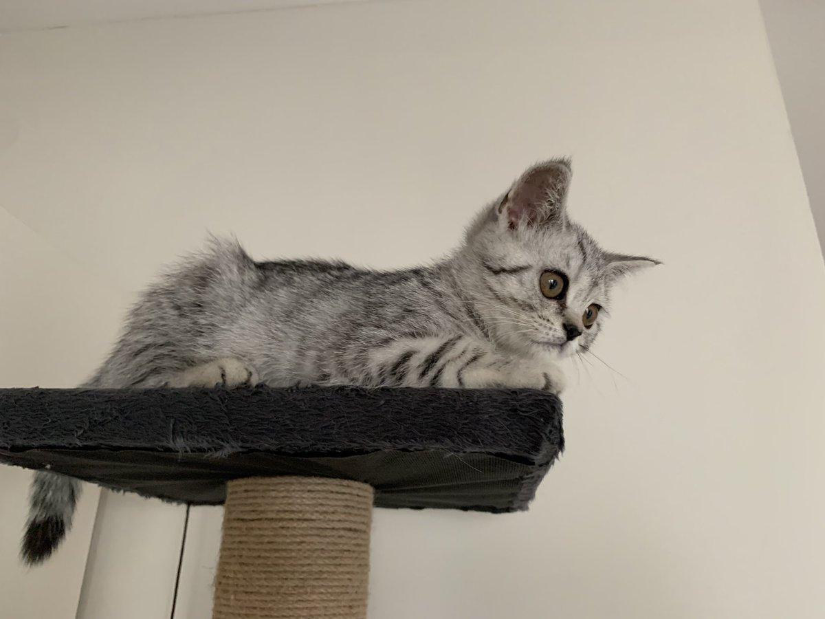 #CatsOfTwitter #friyay #Caturday #cats #catoftheday #catsrule #gatos  #catoftheweek #catvideos #kittyloafmonday #catlife #whiskerswednesday #cutecats #purrsday #FluffyFursday #SundayFunday #jellybellyfriday #toebeantuesdaypic.twitter.com/dwC1dik5Cf