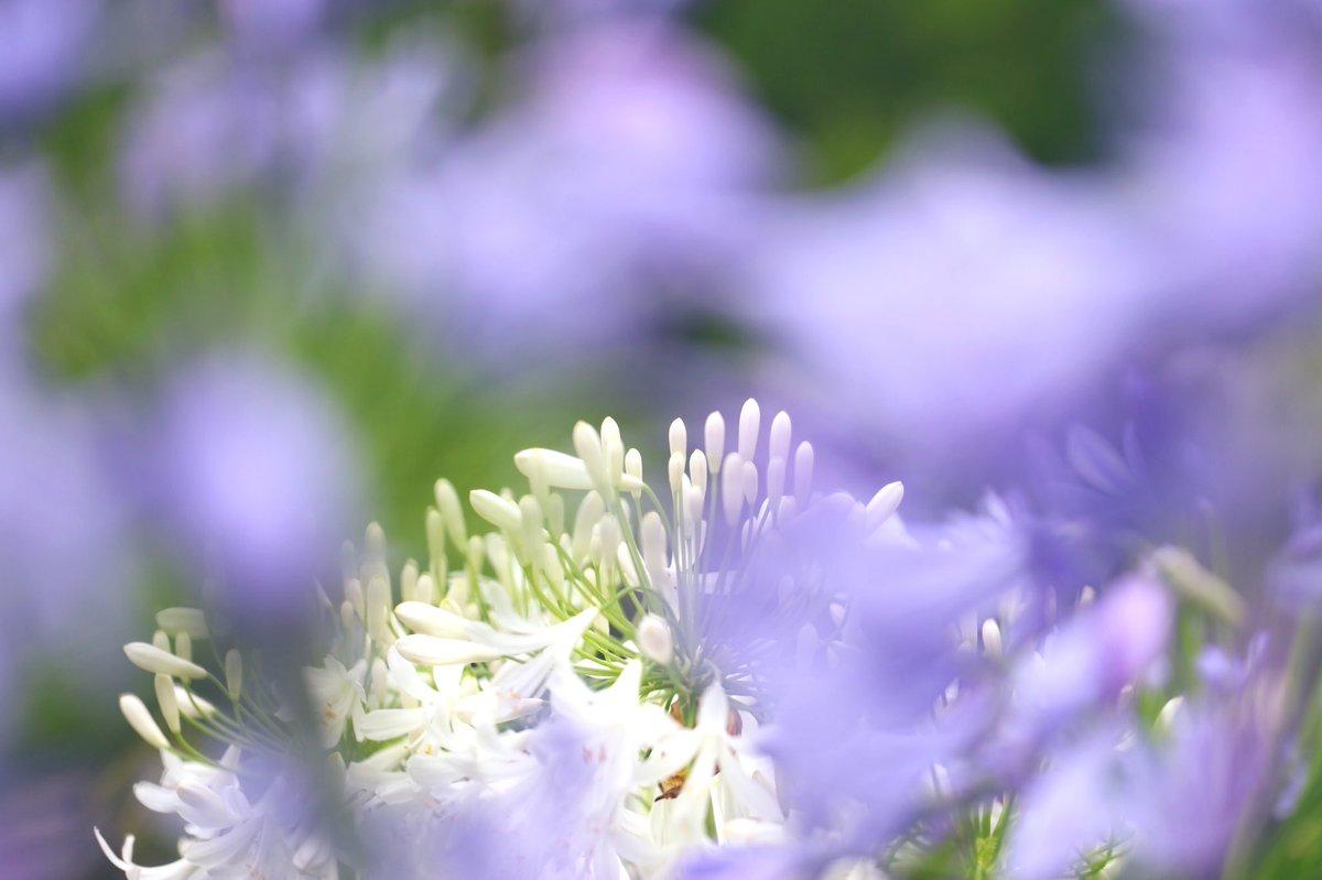 ɢ०ᵒᒄ ʍᵒ~ʳᐢⁱᐢᵍ・*:⋆゜Twitterおはようございます🍒#今日は何の日#納豆の日雨上がりの朝澄み切った空気ふわふわ白い雲青いキャンパスに心を描こうꕤ*.゚今日も穏やかに過ごせますように🍀If you can dream itYou can do it🎶#感謝#おはよう#写真好きな人と繋がりたい