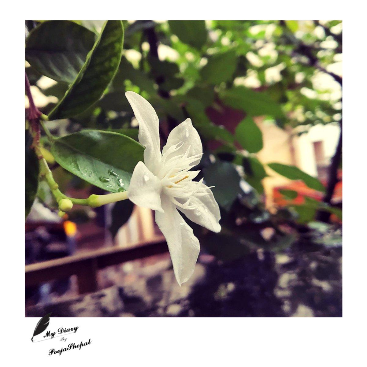 टुट कर भी फुल मेहेक ही जाता है, अँधेरा जो घिर जाए, जलकर भी दिया, उजाला बिखेर ही जाता है  ~Pooja Shepal @kavishala @Kavishala_Hindi @PoetsHouseIndia @PoetrySociety #inspirational #quote #quoteoftheday #hindipoetry #PoetsTwitter #Twitter #poem #MotivationalQuotes #Shayari