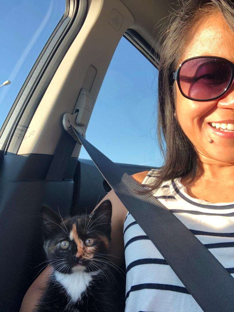Our new kitten Mia #kitten #love #baby pic.twitter.com/EYOmp16Jhh