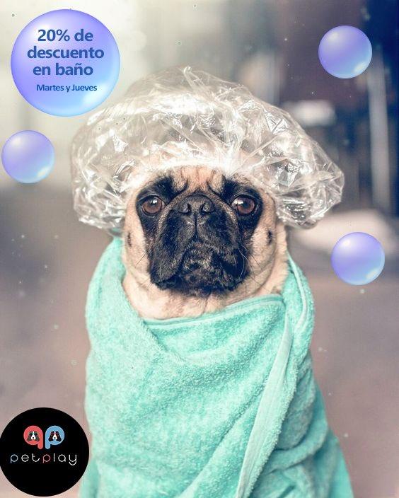 Después de tantos días en casa  tu perrhijo se merece un día de SPA donde los consentiremos como el se merecen  Recuerda que Martes y Jueves son días de grooming en #PetaPlay y tenemos el 20% de descuento en el baño de tu peludo   Agenda ya tu próximo día de spa @En_laDelVallepic.twitter.com/mL63zY9Hzi